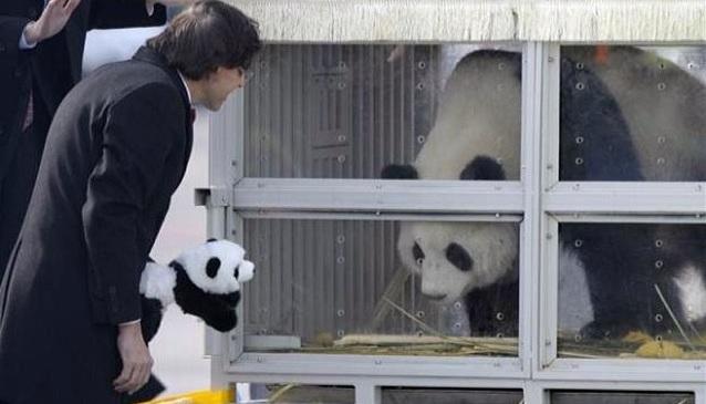 elio di rupo panda