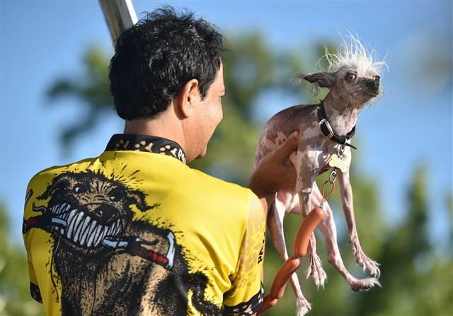 Bu yılın 'en çirkin köpeği' Quasi Modo